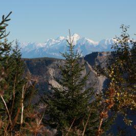 Le Crêt de Chalam et le Crêt au Merle, petites randonnées et émerveillement