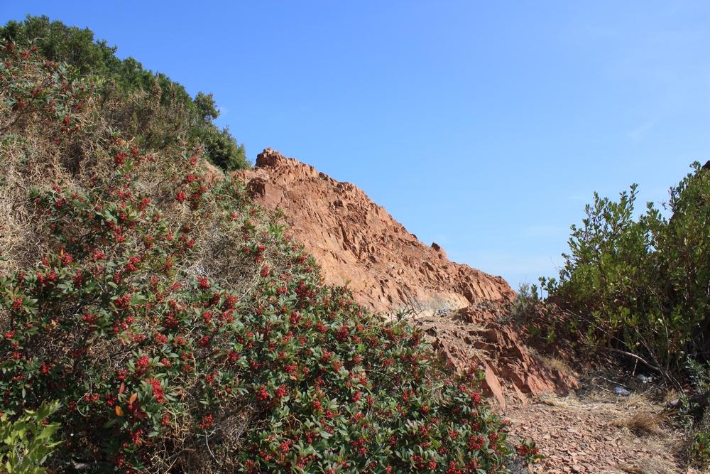 Corniche-d-or-Esterel (4)