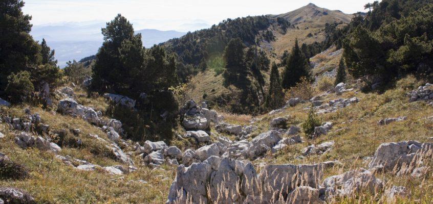 Le Crêt de la Neige, à l'ascension du sommet des Montagnes du Jura