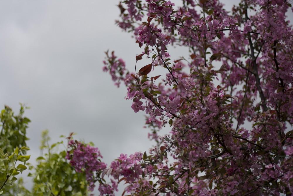 Fleur-aisne