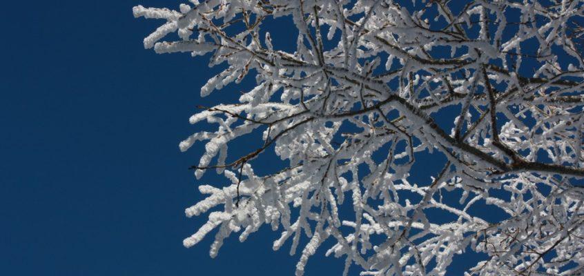 |En images|Un hiver dans le Sancy