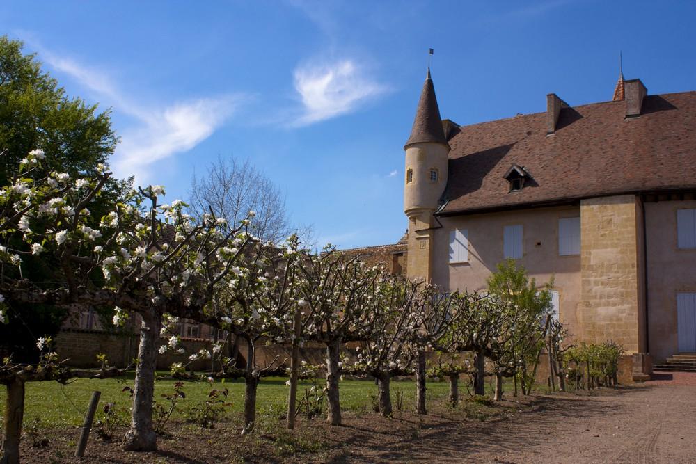 Abbaye Charlieu (6)