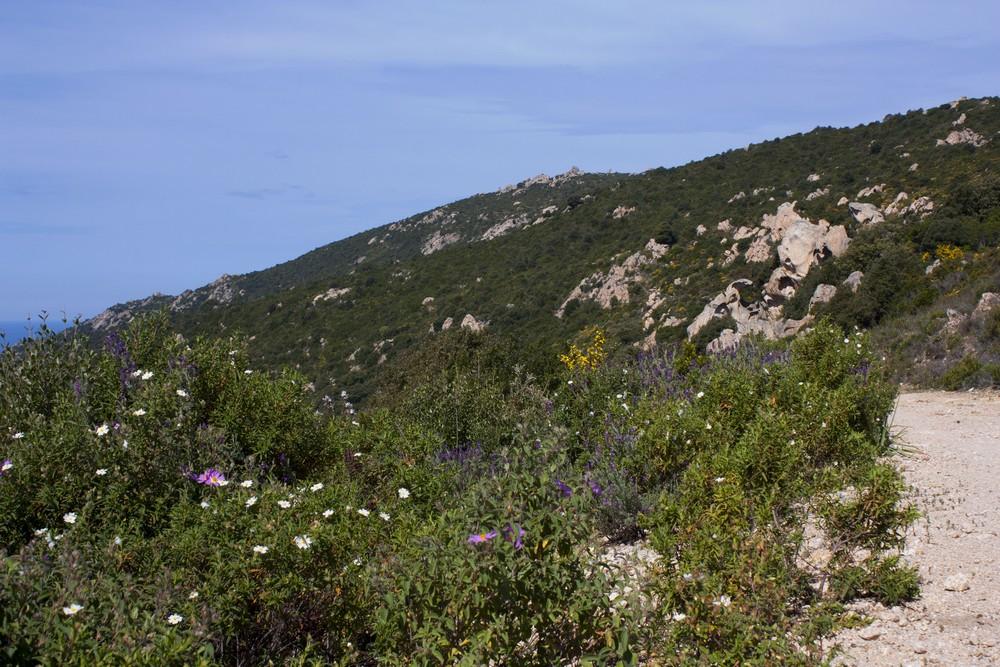 Sentier des cretes Ajaccio (18)