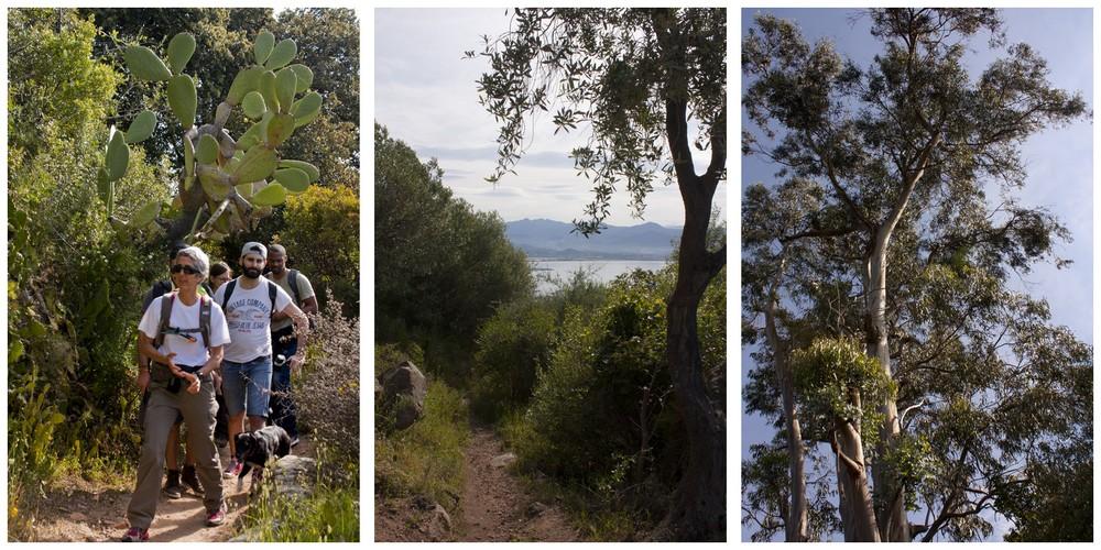 Sentier des cretes Ajaccio (4)