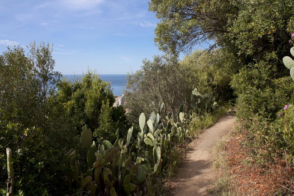 Sentier des cretes Ajaccio (6)