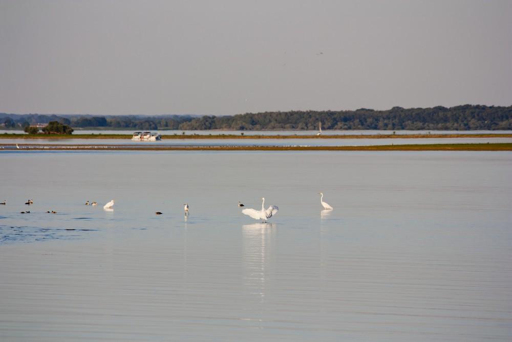 Lac du Der La Boucle Voyageuse (12)