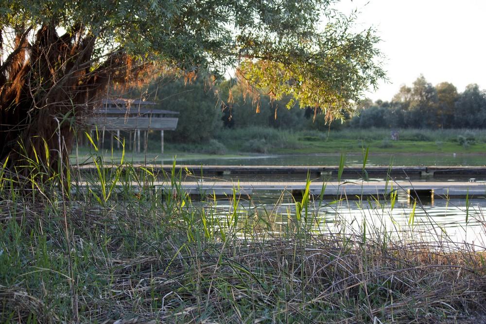 Lac du Der La Boucle Voyageuse (17)