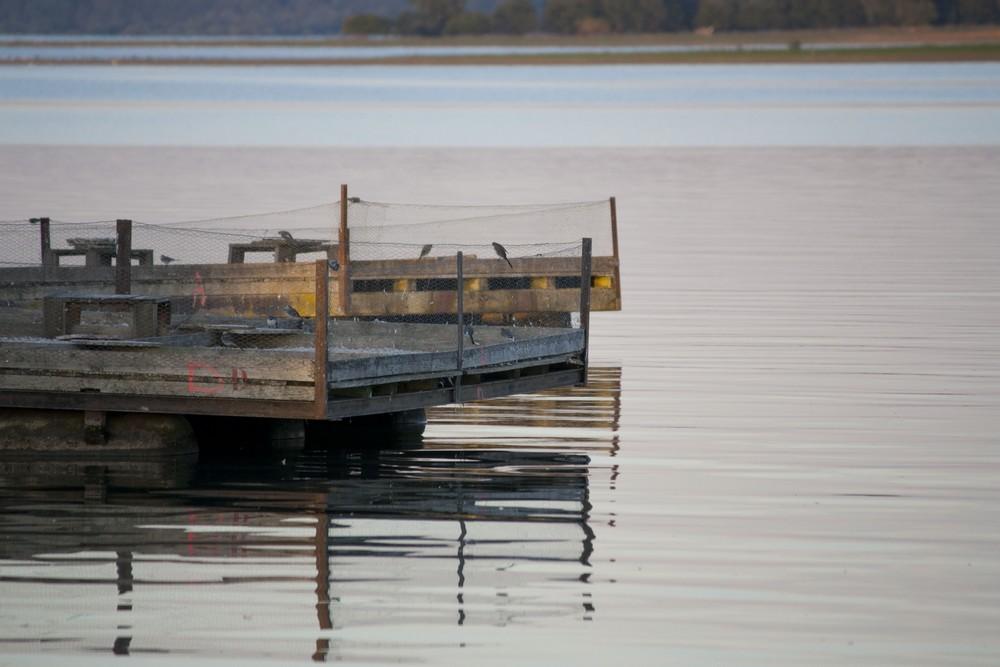 Lac du Der La Boucle Voyageuse (28)