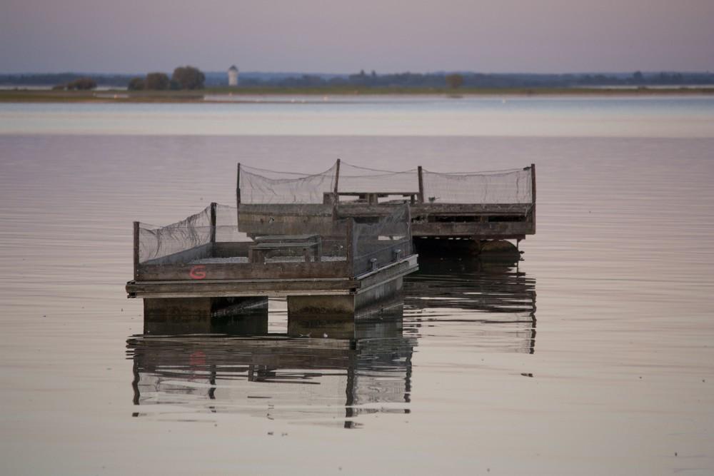 Lac du Der La Boucle Voyageuse (29)