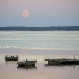 Douceurs de fin d'été au Lac du Der
