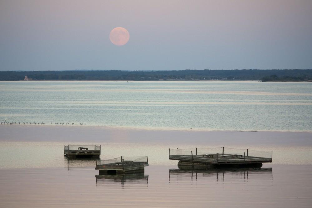 Lac du Der La Boucle Voyageuse (37)