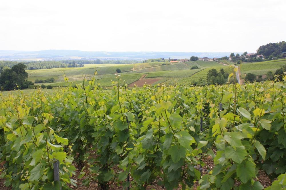 Picardie - Champagne (2)