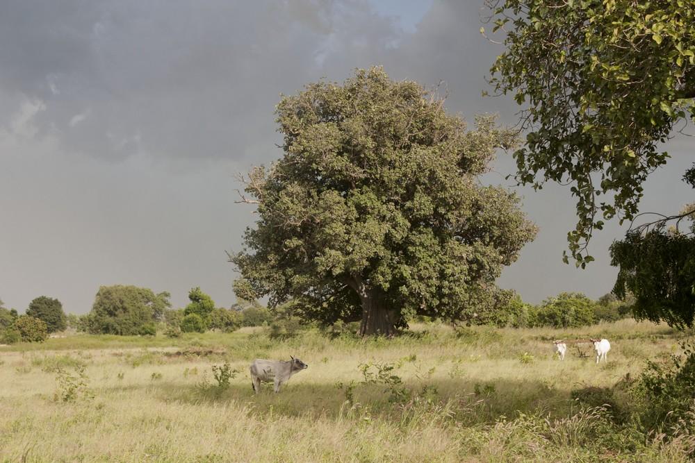 Ndoffane_Senegal_La_Boucle_Voyageuse (5)