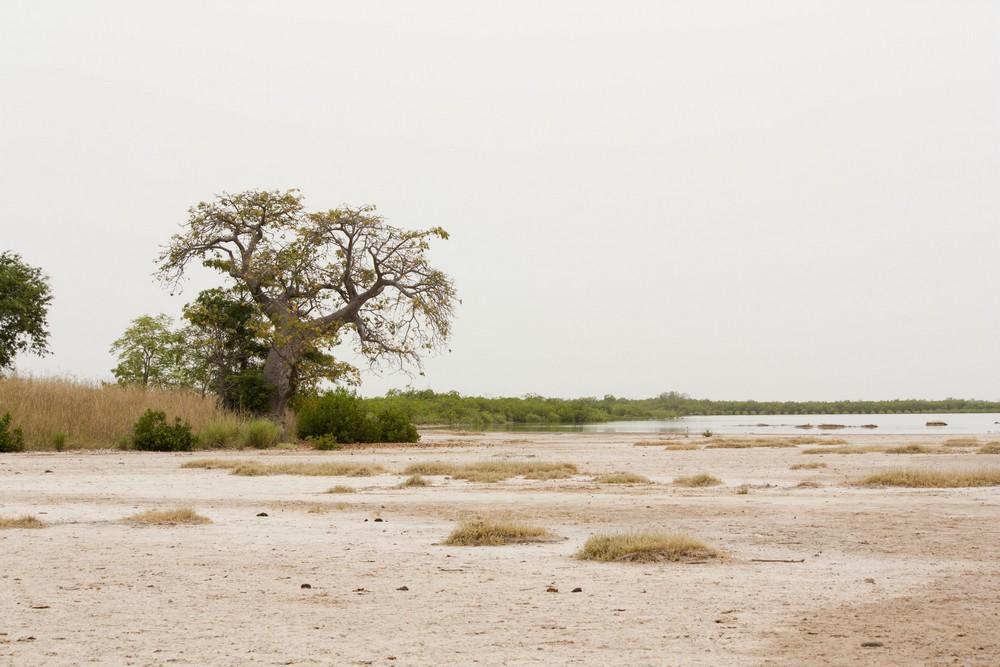 Ile-aux-coquillages_Senegal_La-Boucle-Voyageuse (6)
