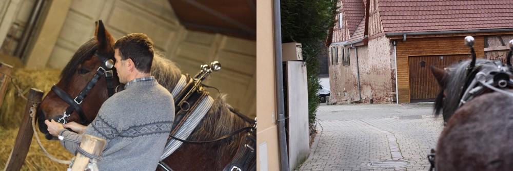 Marlenheim_Equisem