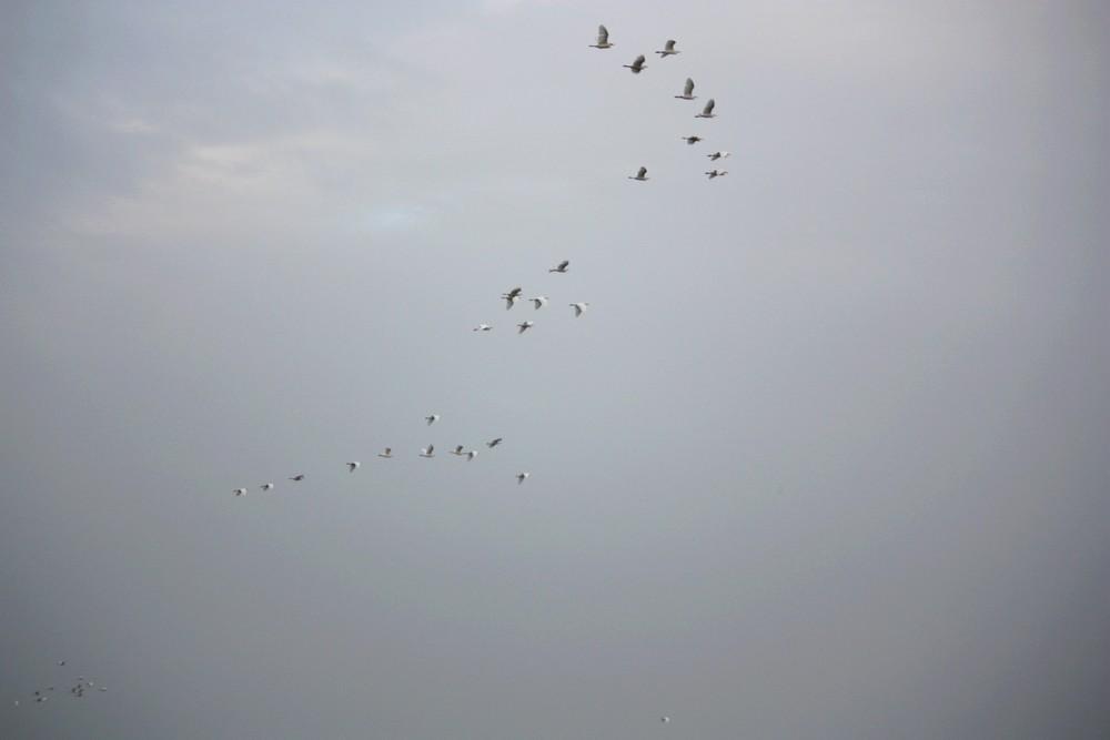Oiseaux_Mangrove_La-Boucle-Voyageuse (4)