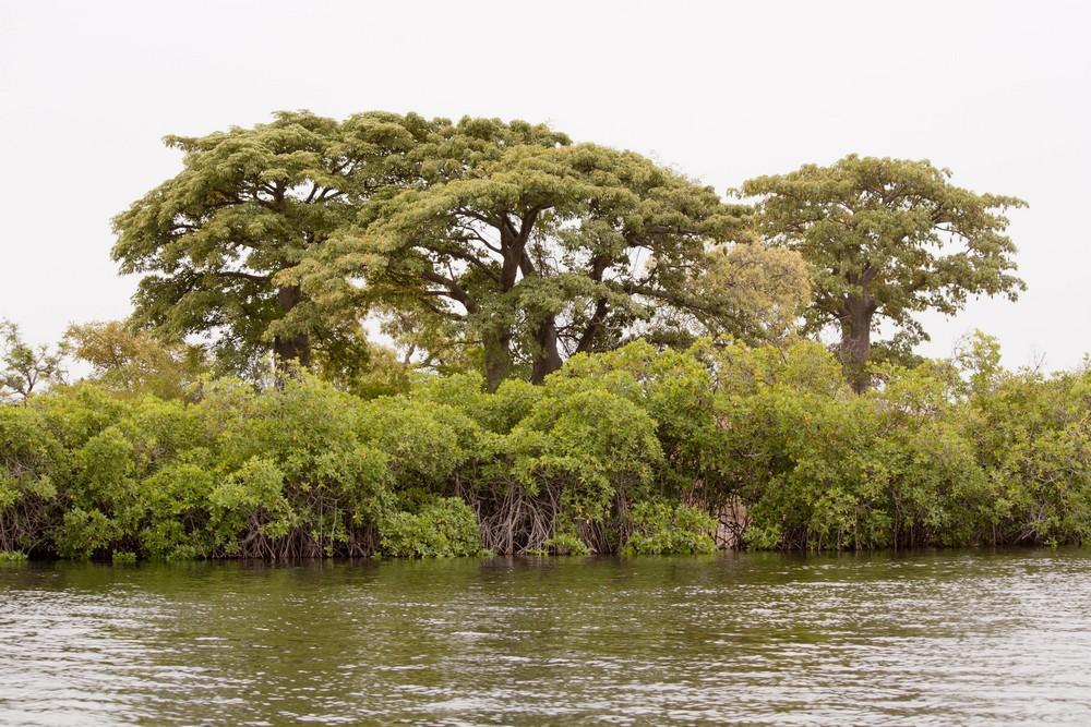 Pirogue_Sine-Saloum_Senegal_La-Boucle-Voyageuse (8)