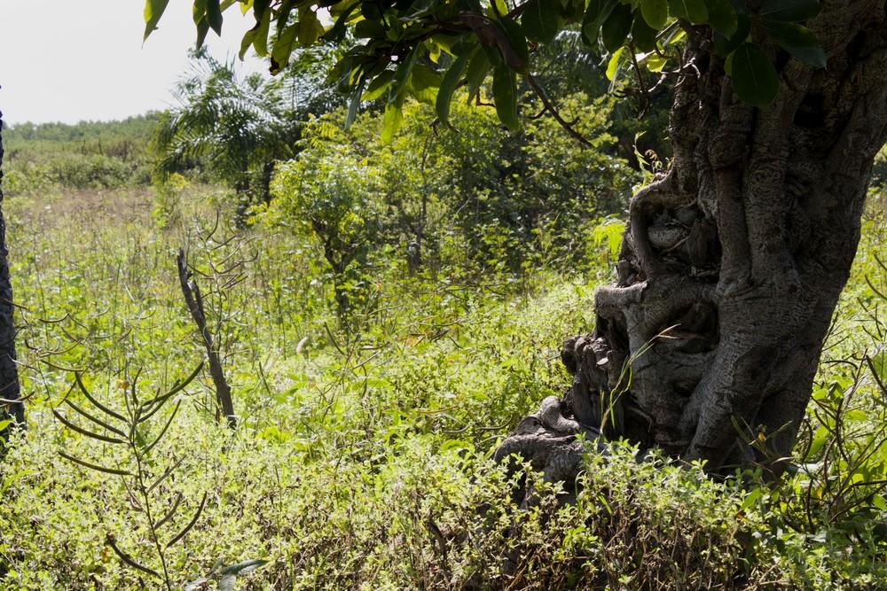 Sénégal_Ndiambang_La-Boucle-Voyageuse (13)