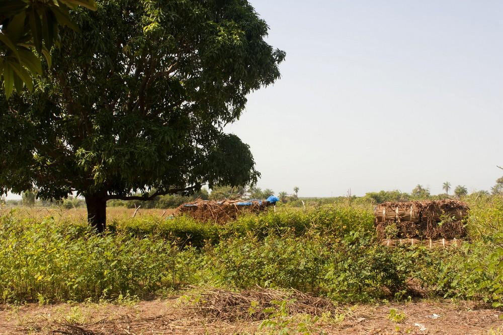 Sénégal_Ndiambang_La-Boucle-Voyageuse (2)