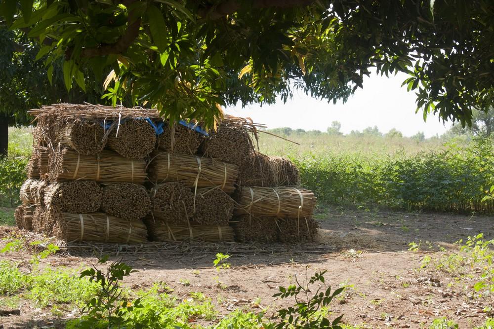 Sénégal_Ndiambang_La-Boucle-Voyageuse (3)