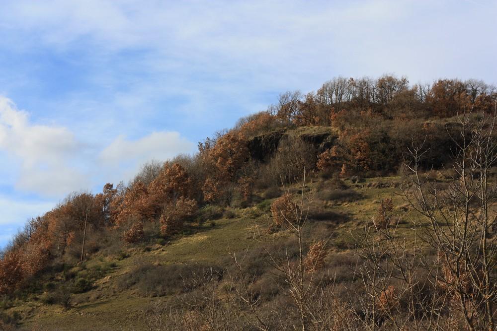 Hiver_Auvergne_Sans_neige (11)