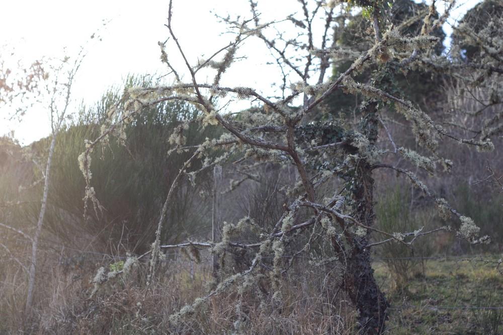 Hiver_Auvergne_Sans_neige (3)