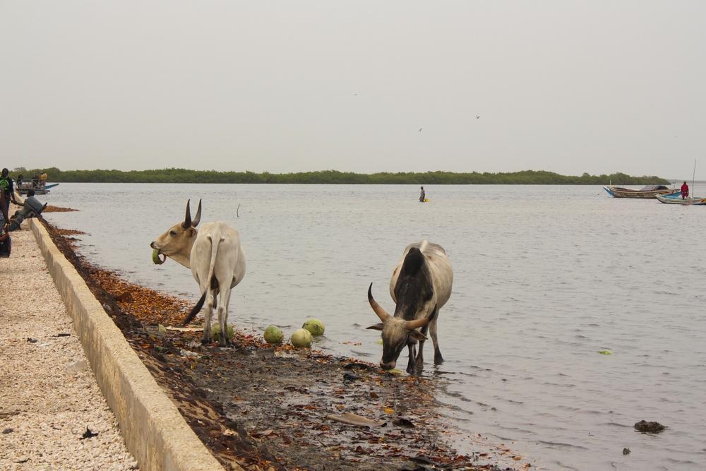 Sine-Saloum_Senegal_La-Boucle-Voyageuse (6)