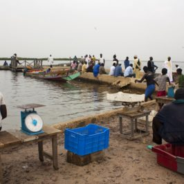 Sénégal – Carnet de voyage #5 – Fambine & alentours