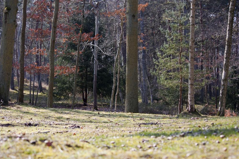 Fere-en-Tardenois-Nature_La-Boucle-Voyageuse (2)