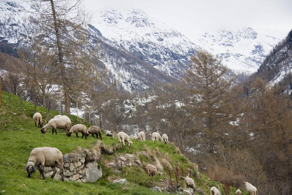 Val d'Herens_La-Boucle-Voyageuse (10)