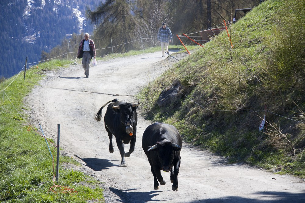 Val d'Herens_La-Boucle-Voyageuse (34)