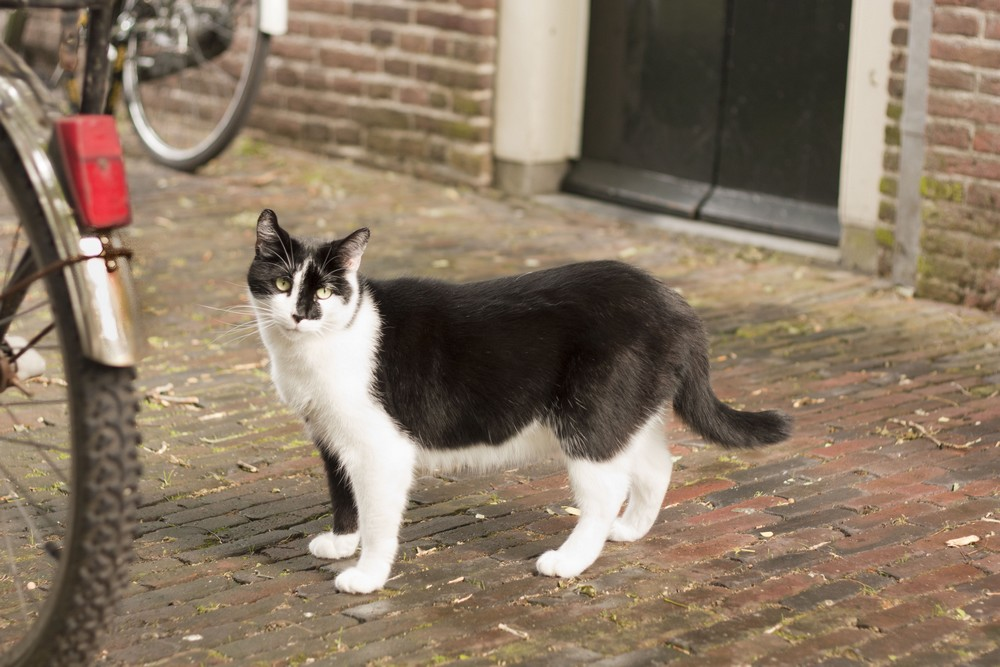 Amsterdam La Boucle Voyageuse (16)