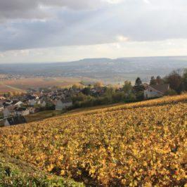 Balade d'automne en Champagne