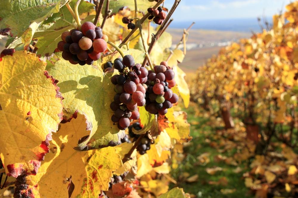 automne-champagne_la-boucle-voyageuse-10