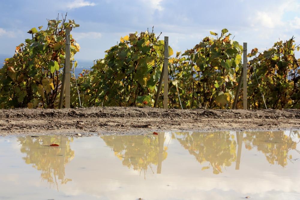 automne-champagne_la-boucle-voyageuse-11