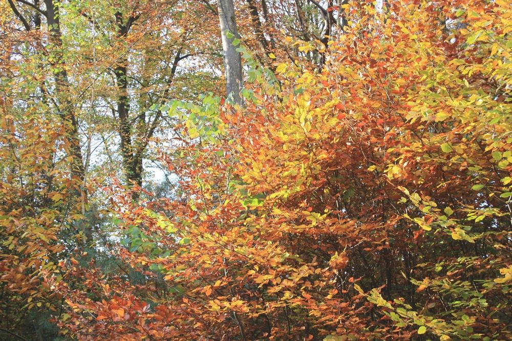 automne-champagne_la-boucle-voyageuse-20