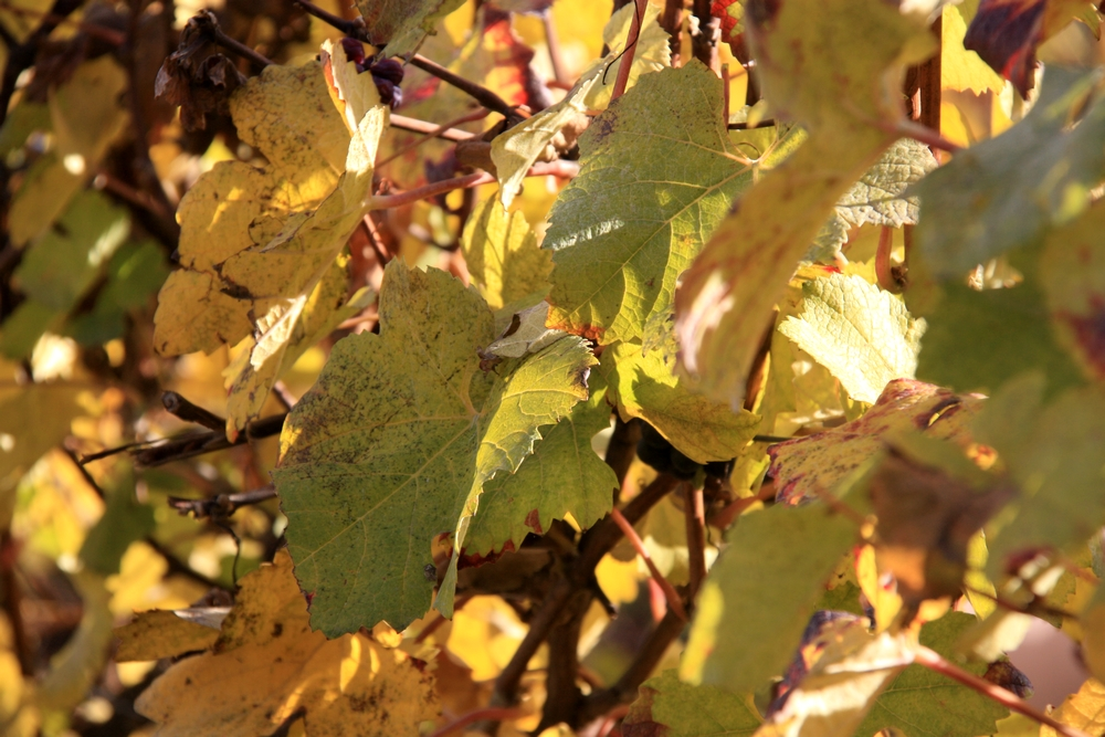 automne-champagne_la-boucle-voyageuse-3