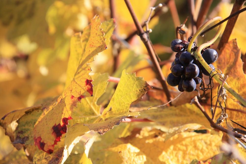 automne-champagne_la-boucle-voyageuse-4