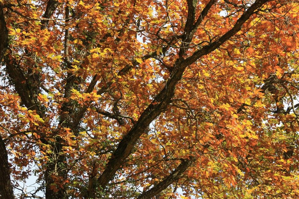 automne-champagne_la-boucle-voyageuse-7