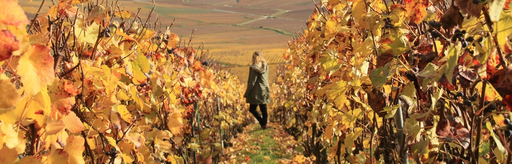 automne-champagne_la-boucle-voyageuse-9