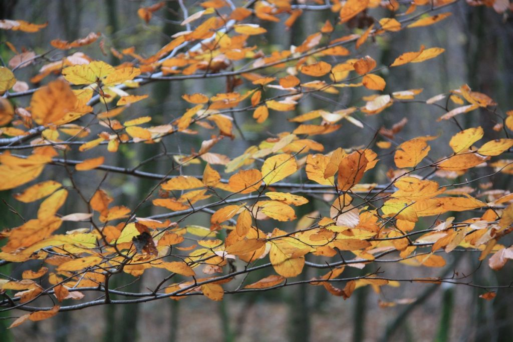 lac-des-vieilles-forges-automne-la-boucle-voyageuse-1