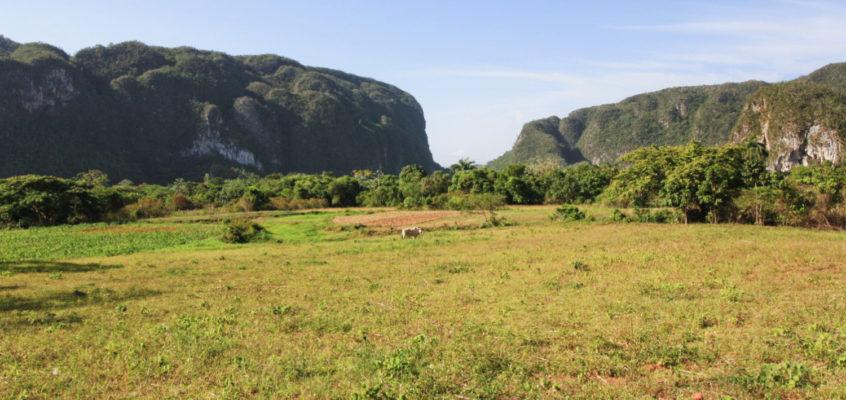 Cuba : Vinales